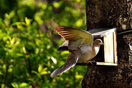 brown pigeon on birdhouse