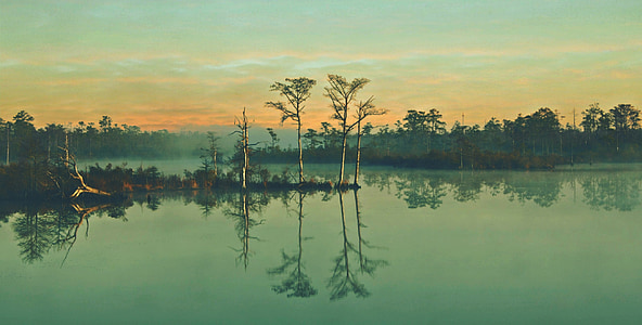 four green trees during dawn
