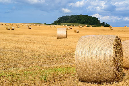 brown hay rolls on grass field