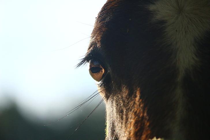 horse's brown eyes
