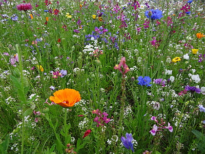 field of assorted-color flowers