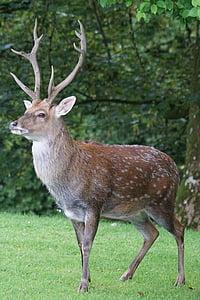 photo of brown deer standing on green grass