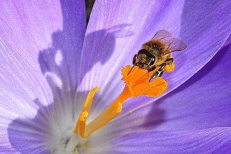bumble bee on orange flower bud