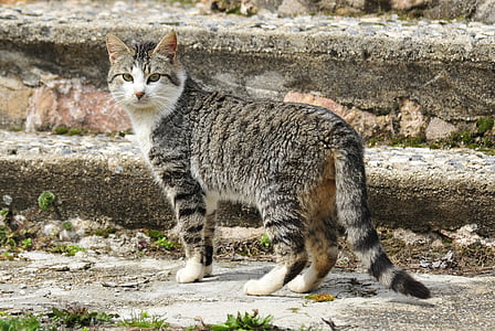 gray tabby cat standing on gray concrete stair during daytime