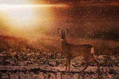 brown deer on snow covered field painting