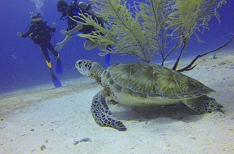 underwater photo of sea turtle near two divers