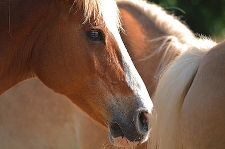 closeup photo of brown horse beside beige horse
