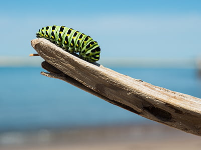 green caterpillar on wood