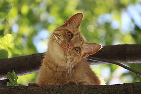 orange tabby cat on tree trunk