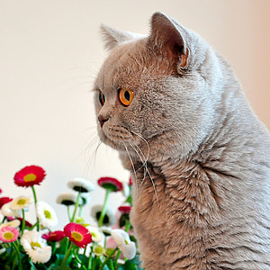 gray cat near pink and white flowers