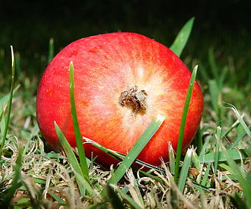 shallow focus photography of red fruit on grass