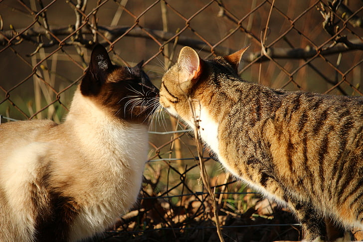 two cat facing each other beside cyclone fence