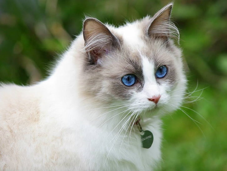 macro photography of white and gray cat