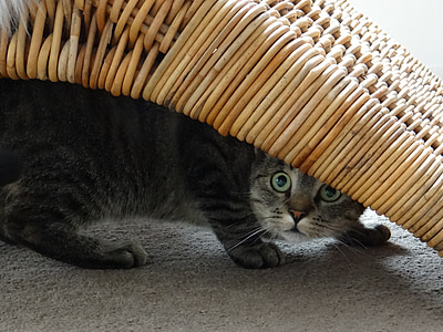 gray cat hiding under brown wicker furniture