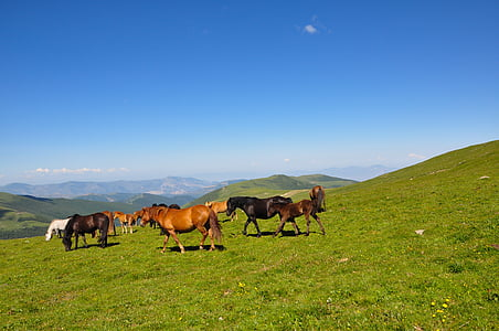 horses standing on grass field during the day