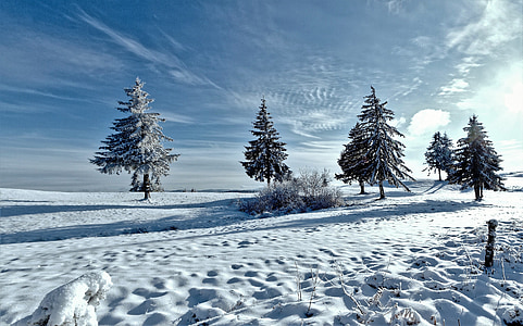 green trees filled of snow under white cloud blue skies