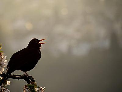 black bird perch on tree branch