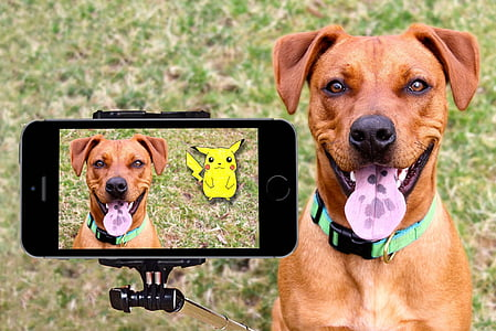 short-coat brown dog displaying on the camera