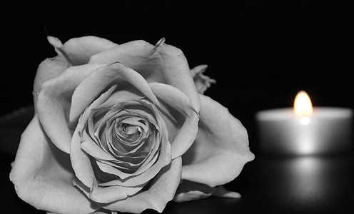 rose flower near selective color photography of tealight candle