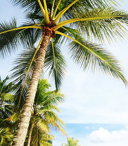 brown and green palm tree during daytime