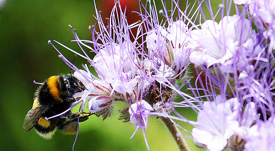 bee perching on purple and white flower