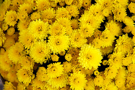 bunch of yellow mums