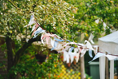 tilt shift lens photography of white and blue bunting during daytime