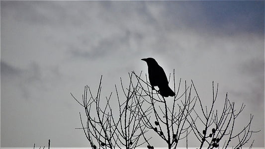 silhouette of black bird perch on bare trees