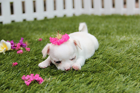 photo of white puppy laying on green grass