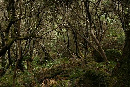 forest, tilos, palma, nature, day, outdoors