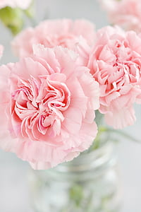pink petaled flowers photography