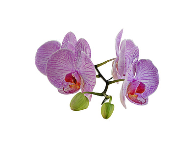 four purple flowers