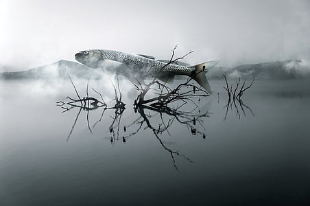 gray fish on body of water with fogs