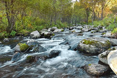 time lapse photography of flowing water surrounded with trees