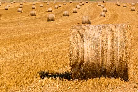 brown haystack