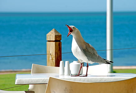 white and gray bird perching on white table