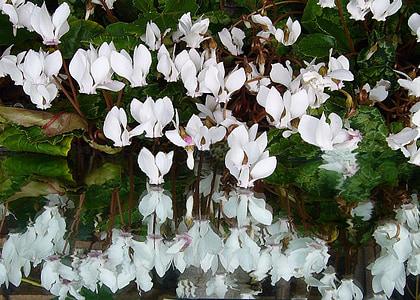 white petaled flower artwork