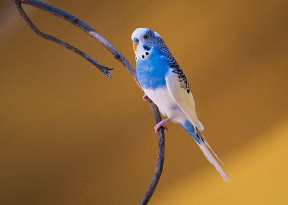 focus photography of blue and white budgerigar perched on branch of tree