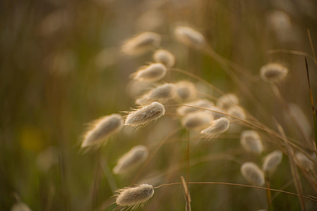 macro photography of white fountain grass