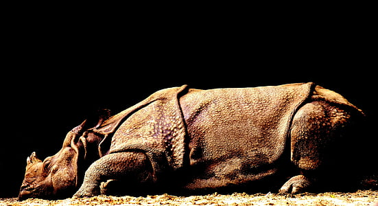 brown rhinoceros laying on brown surface