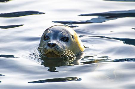 sea lion swam in water
