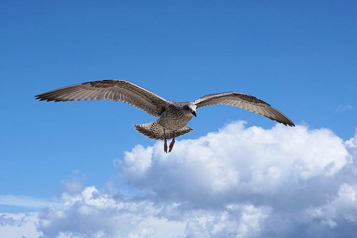 brown flying bird