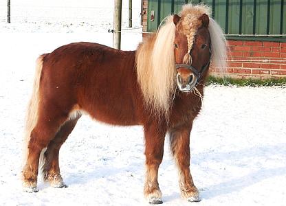 brown foal on ice field near building