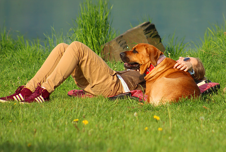 woman laying down on grass lawn next to adult brown Broholmer