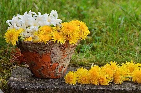 flowerpot, dandelion, yellow, still life, spring, nature