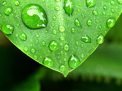 green leaf plant with rain drops closeup photo