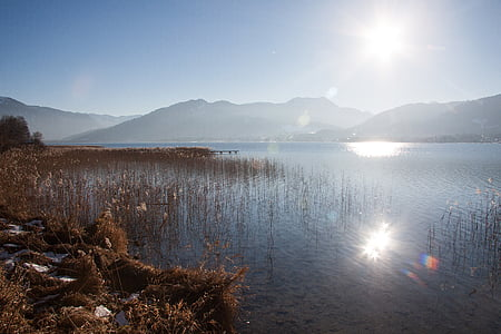 brown plants growing on body of water with mountain background
