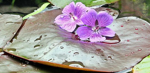 two purple flowers on brown leaf