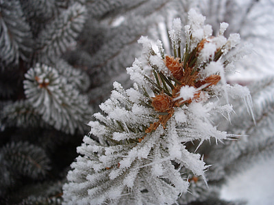 close up photography of pine tree