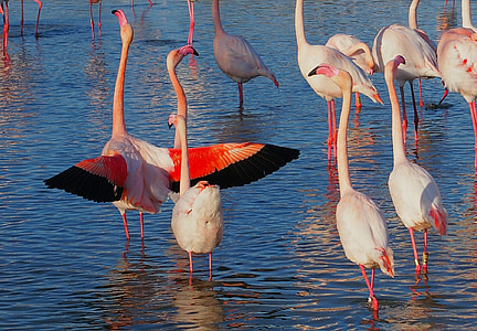 flock of flamingo on body of water